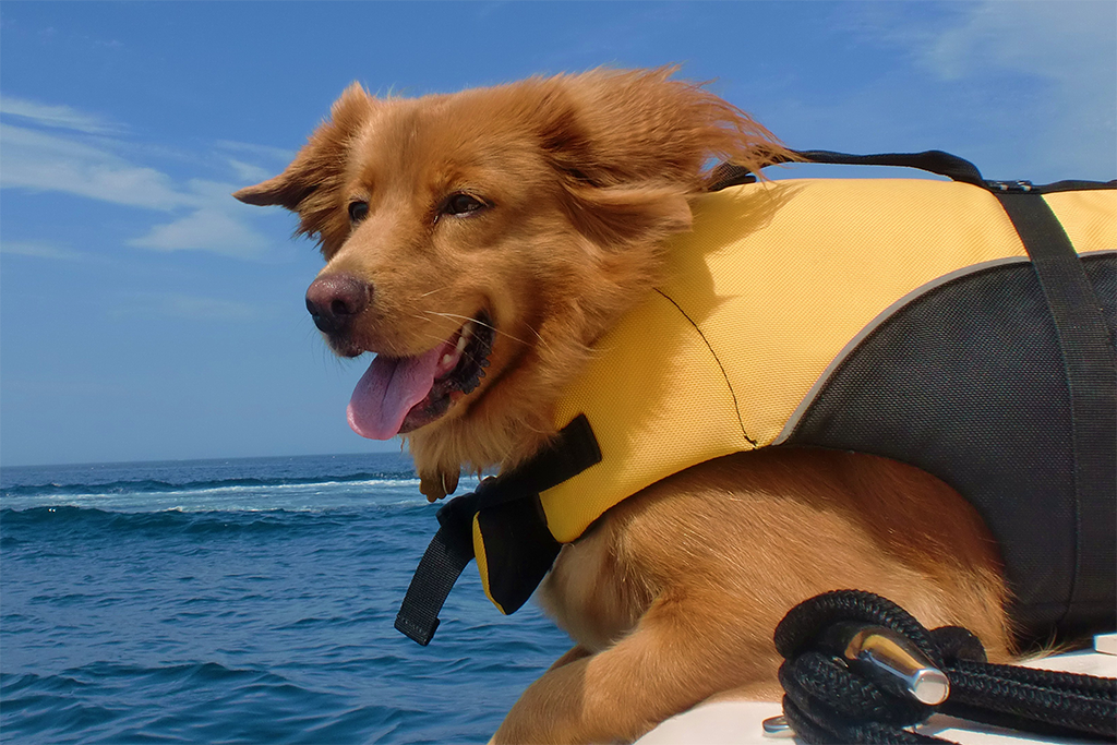 Blog_Dogs_On_Boats_1024_683.png